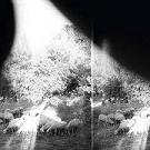 Godspeed You! Black Emperor:Asunder, sweet and other distress